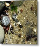 Two Crabs And One Worm Metal Print
