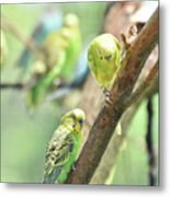 Two Cute Little Parakeets In A Tree Metal Print