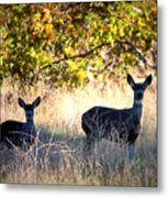 Two Deer In Autumn Meadow Metal Print