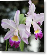 Two Delicate Orchids Metal Print