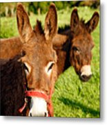 Two Donkeys Metal Print