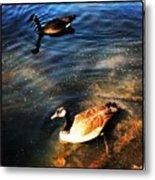 Two Ducks Metal Print