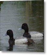 Two Ducks In The Rain Metal Print