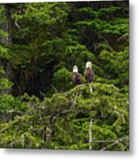 Two Eagles Perched Painterly Metal Print