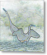 Two Egrets In Water I Glow Brilliant On White II Metal Print