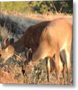 Two Forked Horns Metal Print