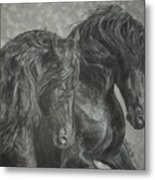 Two Friesian Stallions Metal Print