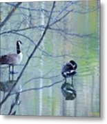Two Geese On A Lake Metal Print