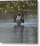 Two Geese On A Pond Metal Print