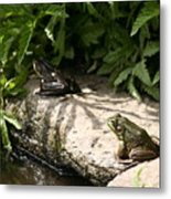 Two Green Frogs Metal Print