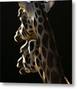 Two Headed Giraffe Metal Print