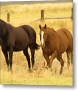 Two Horses In A Field Metal Print