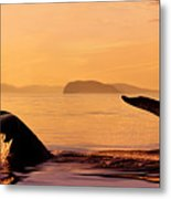 Two Humpback Whales Metal Print