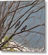 Two If By Tree Metal Print