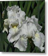 Two Irises Metal Print