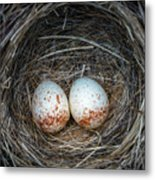 Two Junco Eggs In The Nest Metal Print