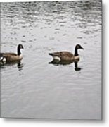 Two Lovely Canadian Geese Metal Print by Douglas Barnett