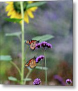 Two Monarch Butterflies And Sunflower 2011 Metal Print