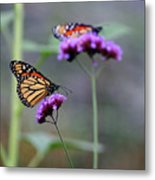 Two Monarchs On Verbena Metal Print