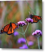 Two Monarchs Sharing 2011 Metal Print