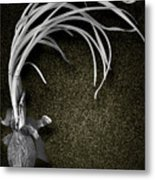 Two Month Old Onion Metal Print