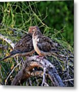 Two Mourning Doves H14 Metal Print