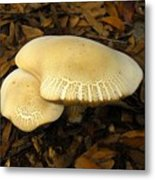 Two Mushrooms Metal Print