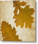 Two Oak Leaves  Metal Print