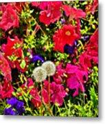 Two Of Dandelion. Floral Carpet. Metal Print