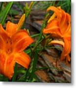 Two Orange Daylilies Metal Print