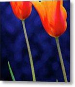 Two Orange Tulips On Blue Metal Print