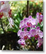 Two Orchid Branches Number One Metal Print
