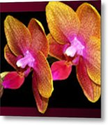 Two Orchids And A Bud Metal Print