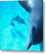 Two Pairs Of Dolphins Metal Print