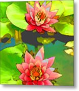 Two Pink Blooming Water Lilies  Metal Print