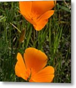 Two Poppies Metal Print