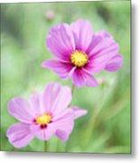 Two Purple Cosmos Flowers Metal Print