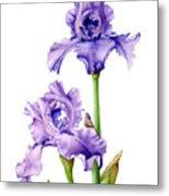 Two Purple Irises Metal Print