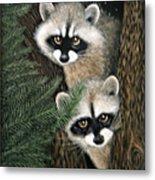 Two Raccoons Metal Print