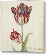 Two Red And White Tulips. Colombijn And Wit Van Poelenburg Metal Print