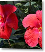 Two Red Hibiscus With Border Metal Print