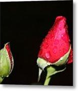 Two Red Rosebuds Metal Print