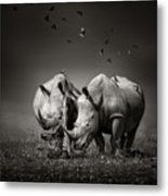Two Rhinoceros With Birds In Bw Metal Print