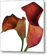 Two Rust Calla Lilies Square Metal Print