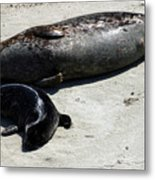 Two Seals Metal Print