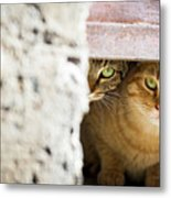 Two Stray Cats Metal Print