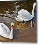 Two Swans On Spring Water Metal Print