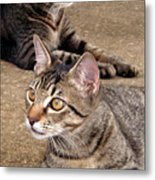 Two Tabby Cats Metal Print