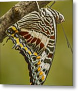 Two Tailed Pasha Butterfly Metal Print