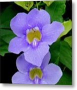 Two Thunbergia With Dew Drops Metal Print